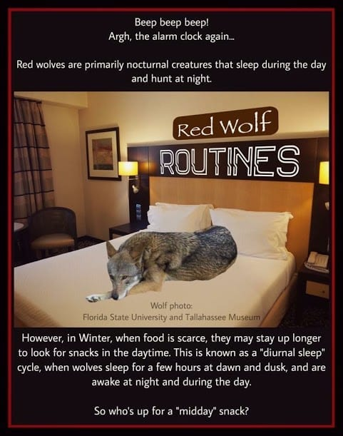 Red Wolf Calendar - National Wolfwatcher Coalition